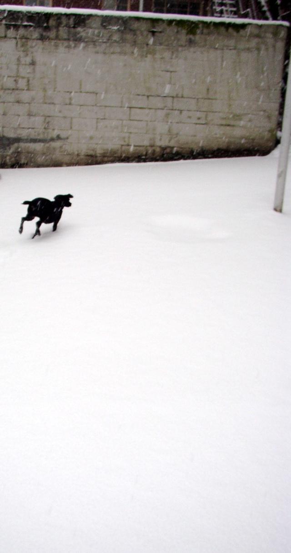 snowdash.jpg